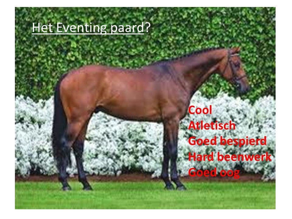 Het Eventing paard? Cool Atletisch Goed bespierd Hard beenwerk Goed oog