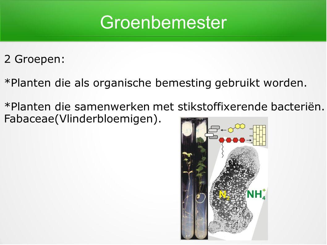 Groenbemester 2 Groepen: *Planten die als organische bemesting gebruikt worden. *Planten die samenwerken met stikstoffixerende bacteriën. Fabaceae(Vli