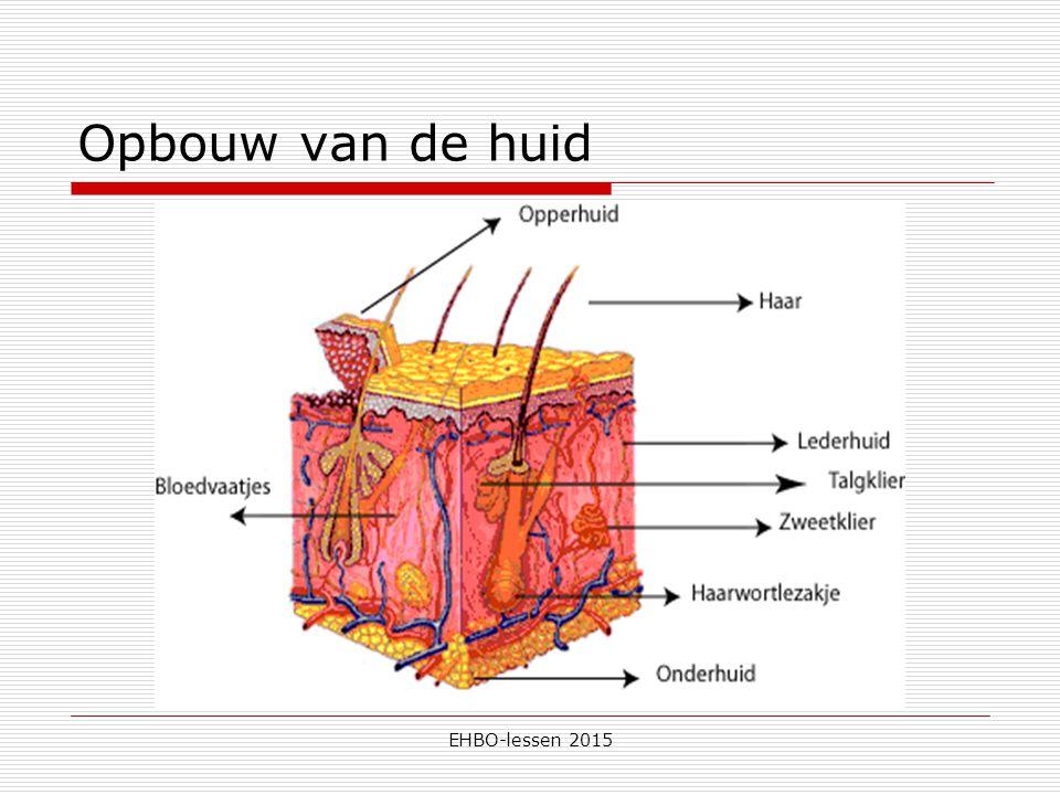 EHBO-lessen 2015 Wonden  Wat zijn de functies van de huid.