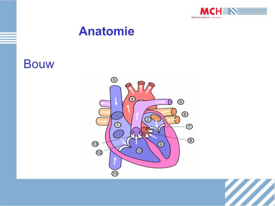 Geleiding/ECG Elektrische activiteit van het hart