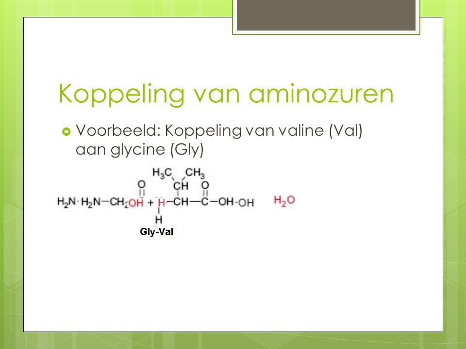 Koppeling van aminozuren  Voorbeeld: Koppeling van valine (Val) aan glycine (Gly)