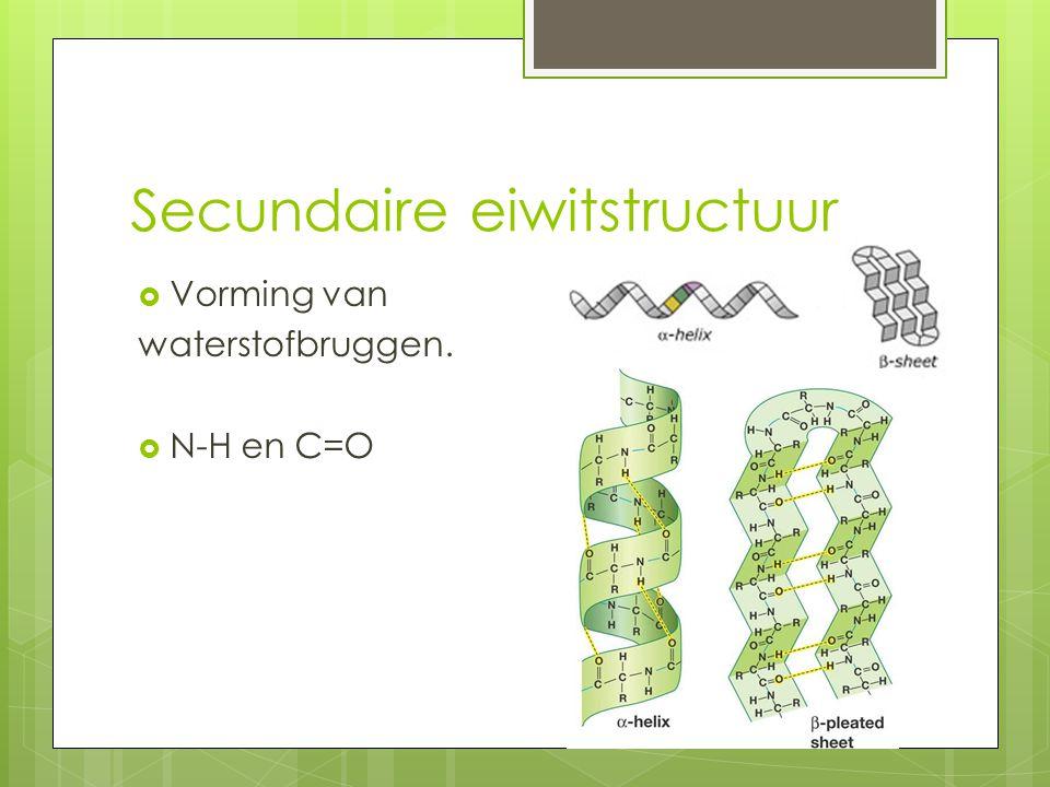 Secundaire eiwitstructuur  Vorming van waterstofbruggen.  N-H en C=O