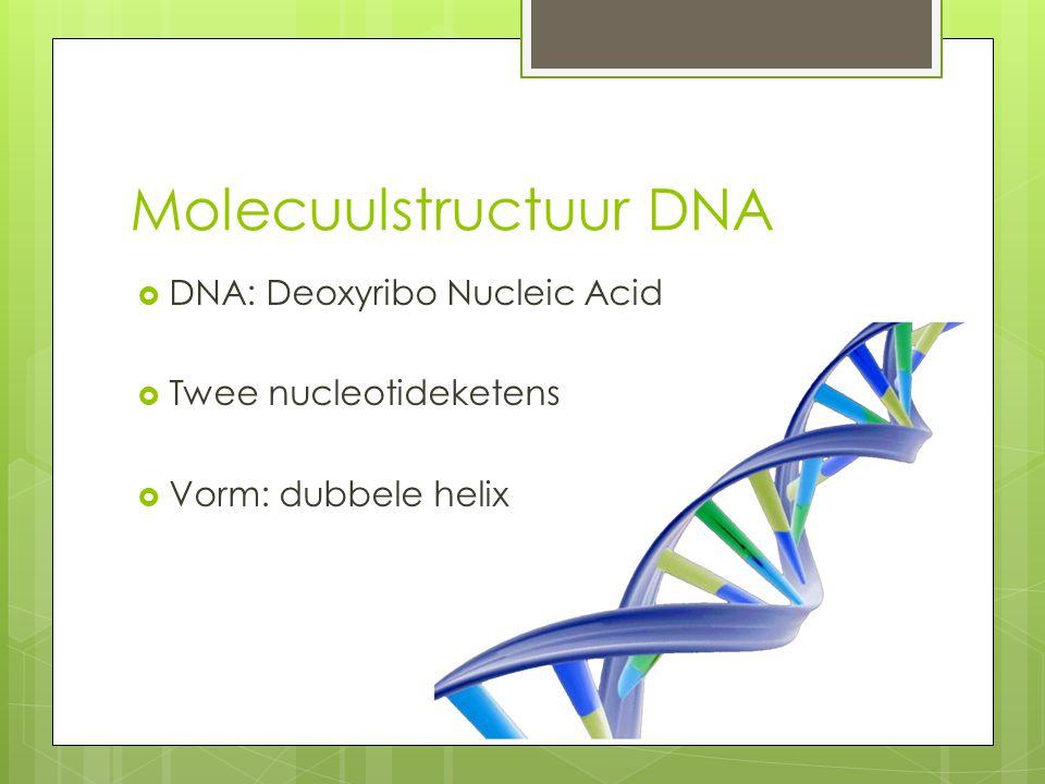 Molecuulstructuur DNA  DNA: Deoxyribo Nucleic Acid  Twee nucleotideketens  Vorm: dubbele helix