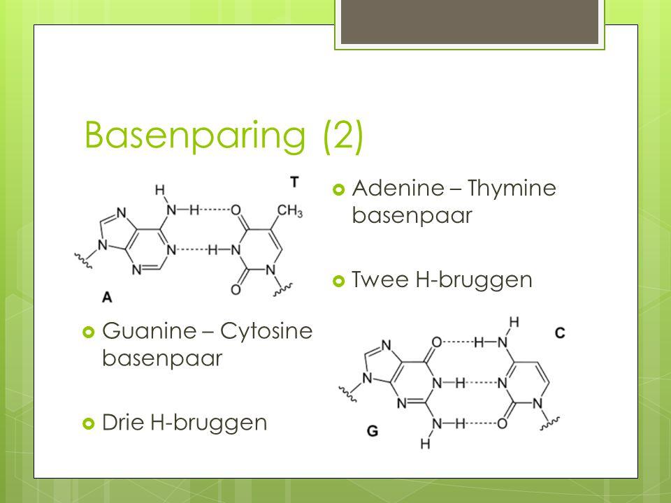 Basenparing (2)  Adenine – Thymine basenpaar  Twee H-bruggen  Guanine – Cytosine basenpaar  Drie H-bruggen