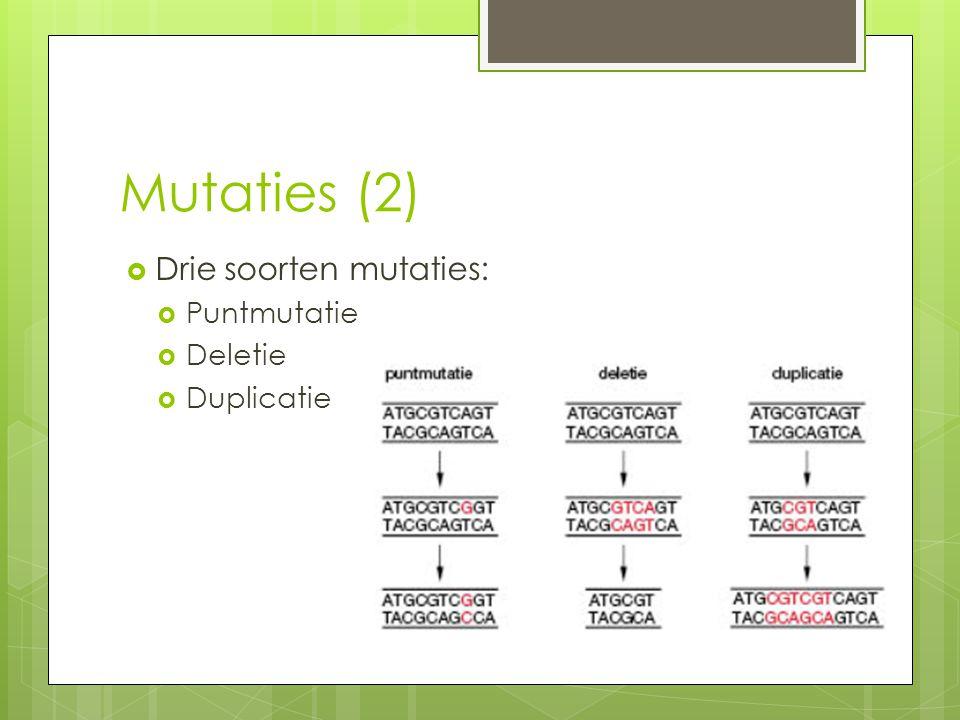 Mutaties (2)  Drie soorten mutaties:  Puntmutatie  Deletie  Duplicatie