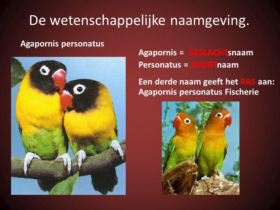 De wetenschappelijke naamgeving. Agapornis personatus Agapornis = GESLACHTsnaam Personatus = SOORTnaam Een derde naam geeft het RAS aan: Agapornis per