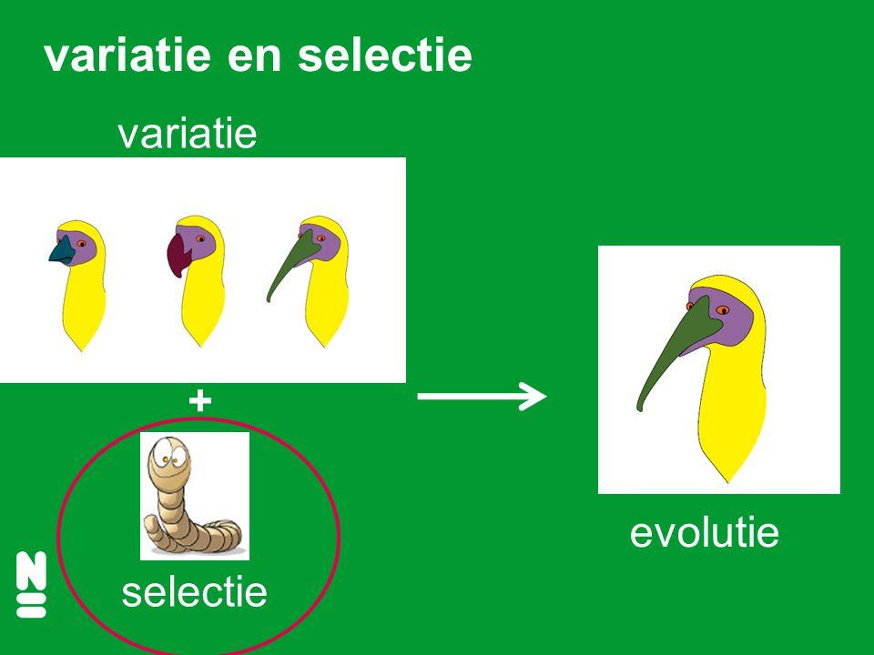 selectie evolutie variatie + variatie en selectie