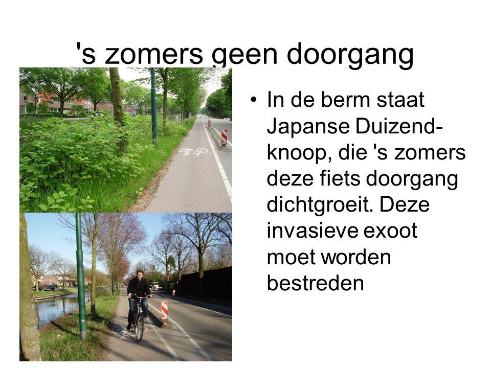 s zomers geen doorgang In de berm staat Japanse Duizend- knoop, die s zomers deze fiets doorgang dichtgroeit.