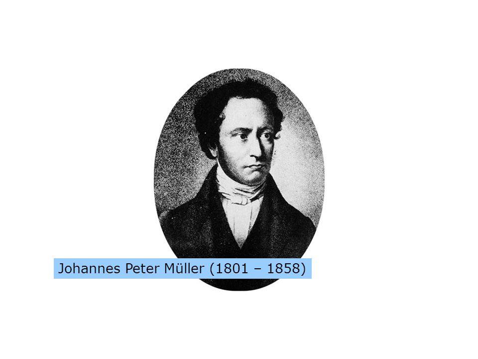 Johannes Peter Müller (1801 – 1858)