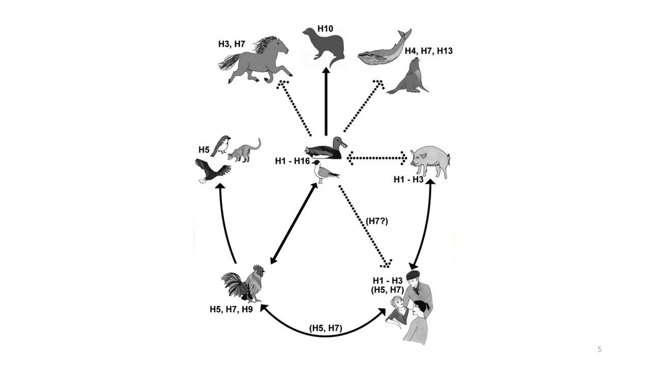 Publiek 2: Q-koortsepidemie (2007-2011) De humane en veterinaire kolommen dienen op het terrein van zoönosen beter te worden geïntegreerd Evaluatierapport Q-koorts Commissie Van Dijk (2010) 114 6