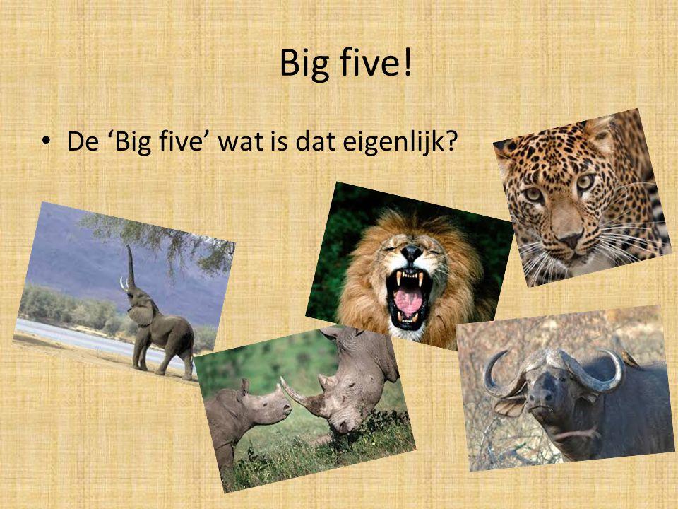 Big five! De 'Big five' wat is dat eigenlijk?