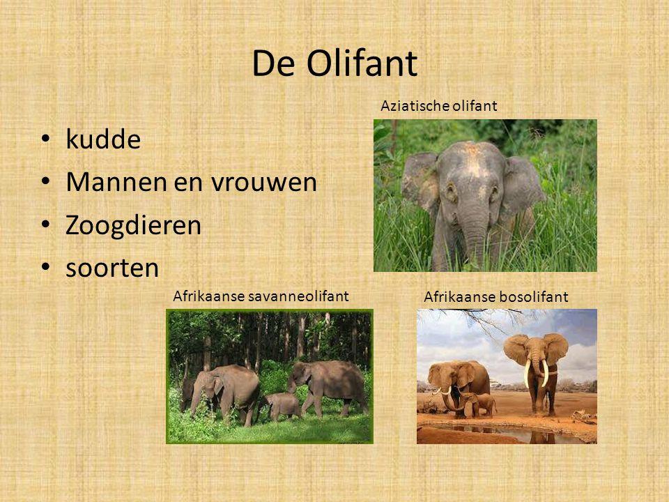 De Olifant kudde Mannen en vrouwen Zoogdieren soorten Afrikaanse savanneolifant Afrikaanse bosolifant Aziatische olifant