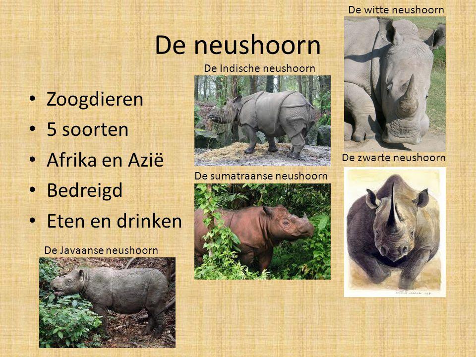 De neushoorn Zoogdieren 5 soorten Afrika en Azië Bedreigd Eten en drinken De witte neushoorn De zwarte neushoorn De Indische neushoorn De sumatraanse