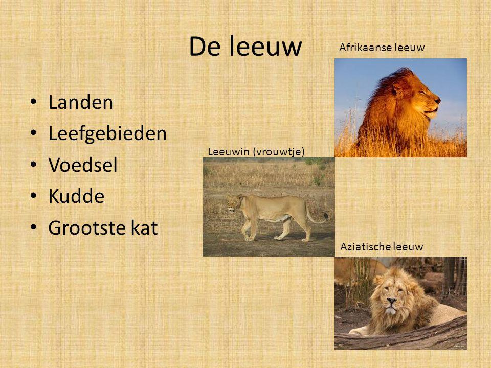 De leeuw Landen Leefgebieden Voedsel Kudde Grootste kat Afrikaanse leeuw Aziatische leeuw Leeuwin (vrouwtje)