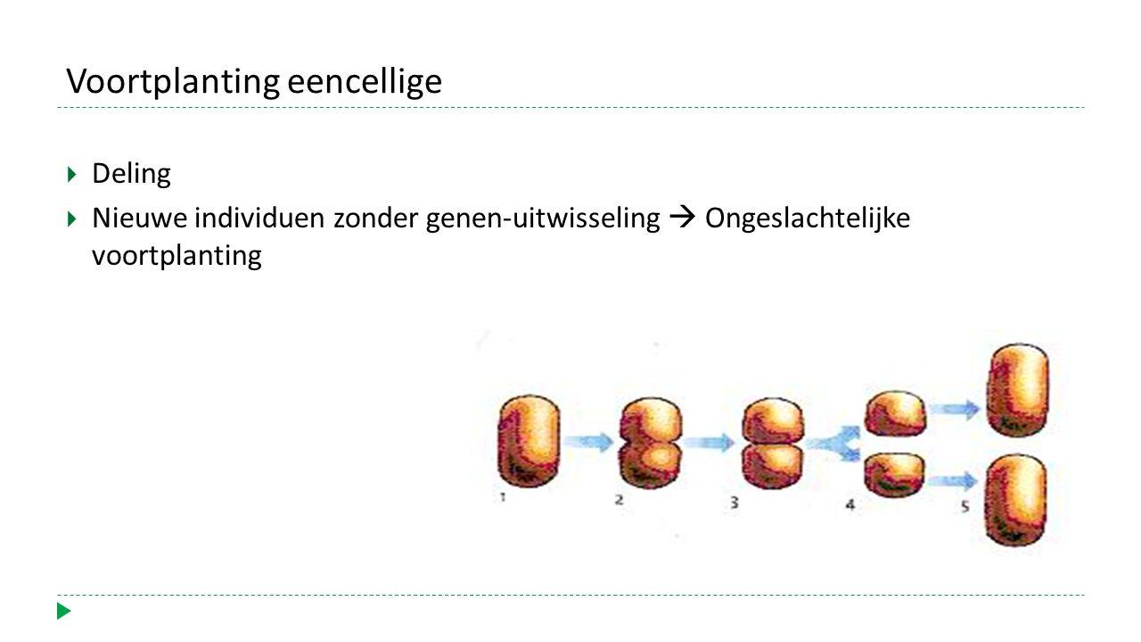 Voortplanting eencellige  Deling  Nieuwe individuen zonder genen-uitwisseling  Ongeslachtelijke voortplanting