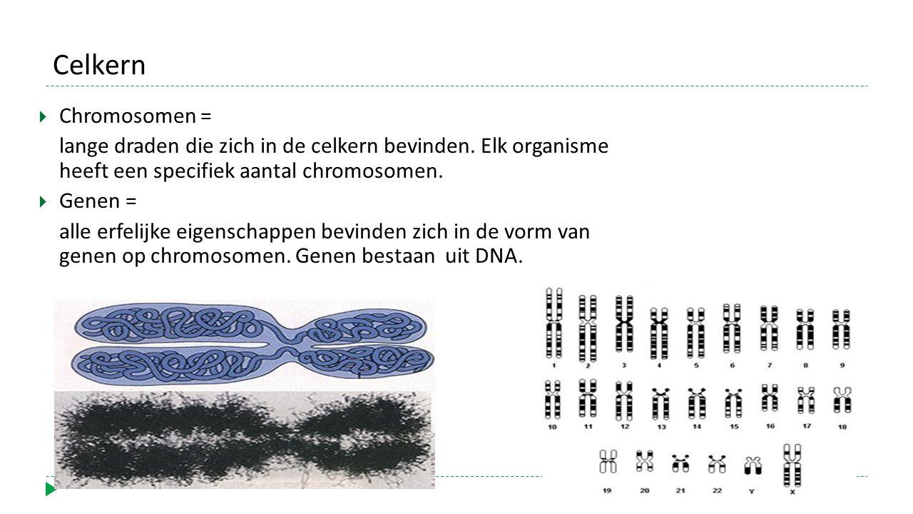 Celkern  Chromosomen = lange draden die zich in de celkern bevinden. Elk organisme heeft een specifiek aantal chromosomen.  Genen = alle erfelijke e
