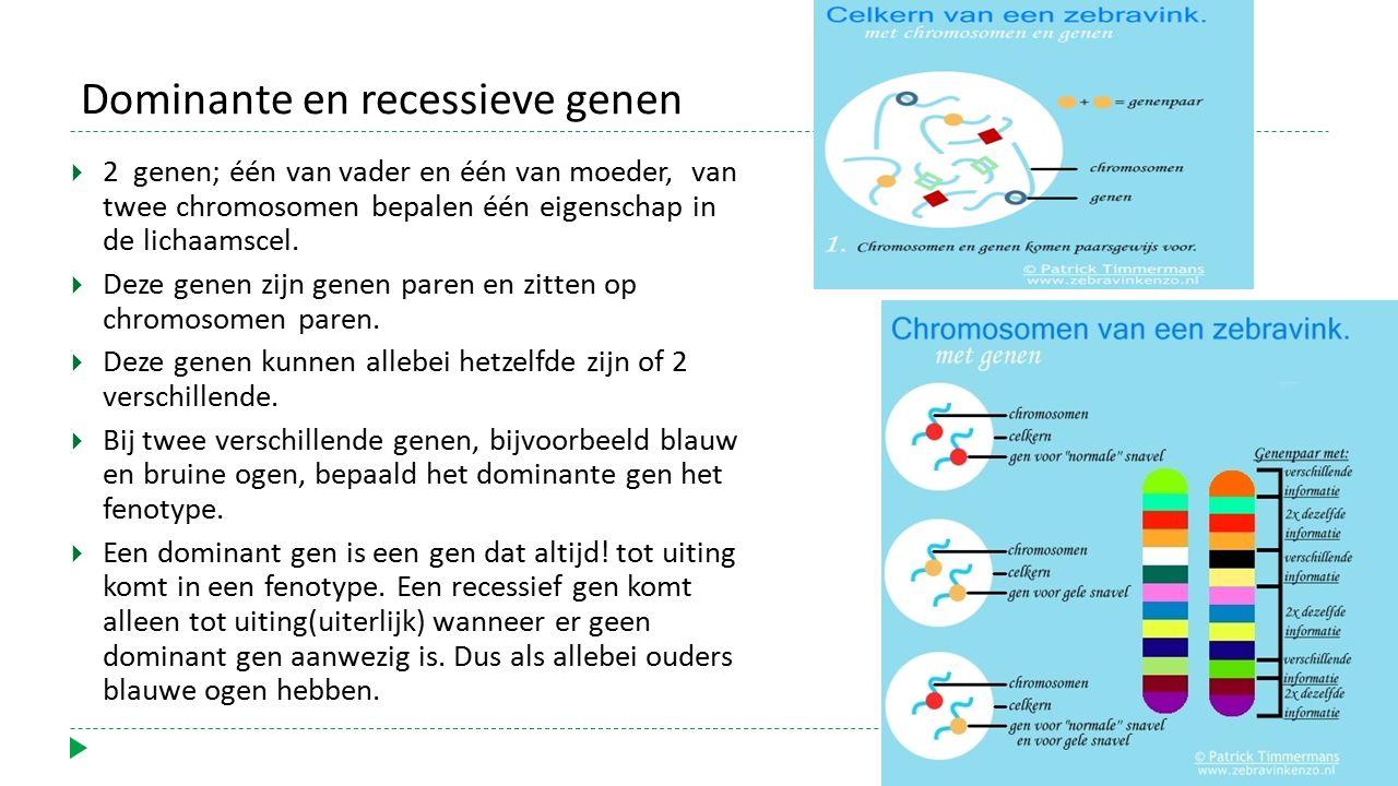 Dominante en recessieve genen  2 genen; één van vader en één van moeder, van twee chromosomen bepalen één eigenschap in de lichaamscel.  Deze genen