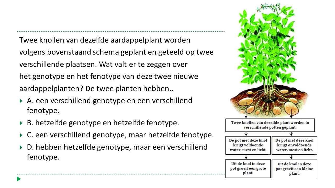 Twee knollen van dezelfde aardappelplant worden volgens bovenstaand schema geplant en geteeld op twee verschillende plaatsen. Wat valt er te zeggen ov