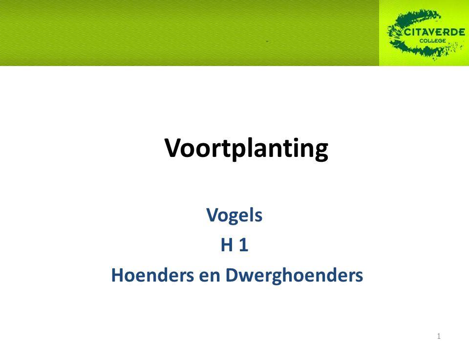 Voortplanting Vogels H 1 Hoenders en Dwerghoenders 1