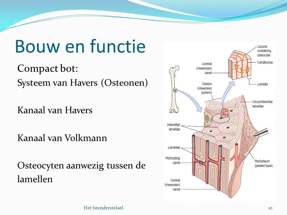 Bouw en functie 10Het beenderstelsel Compact bot: Systeem van Havers (Osteonen) Kanaal van Havers Kanaal van Volkmann Osteocyten aanwezig tussen de la