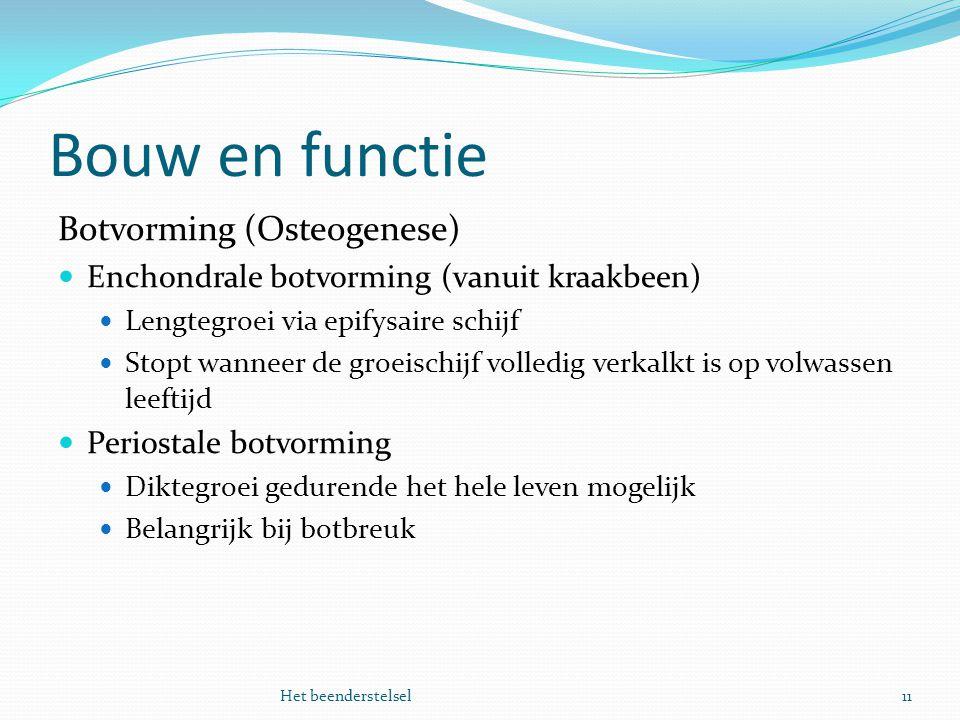Bouw en functie 11Het beenderstelsel Botvorming (Osteogenese) Enchondrale botvorming (vanuit kraakbeen) Lengtegroei via epifysaire schijf Stopt wannee