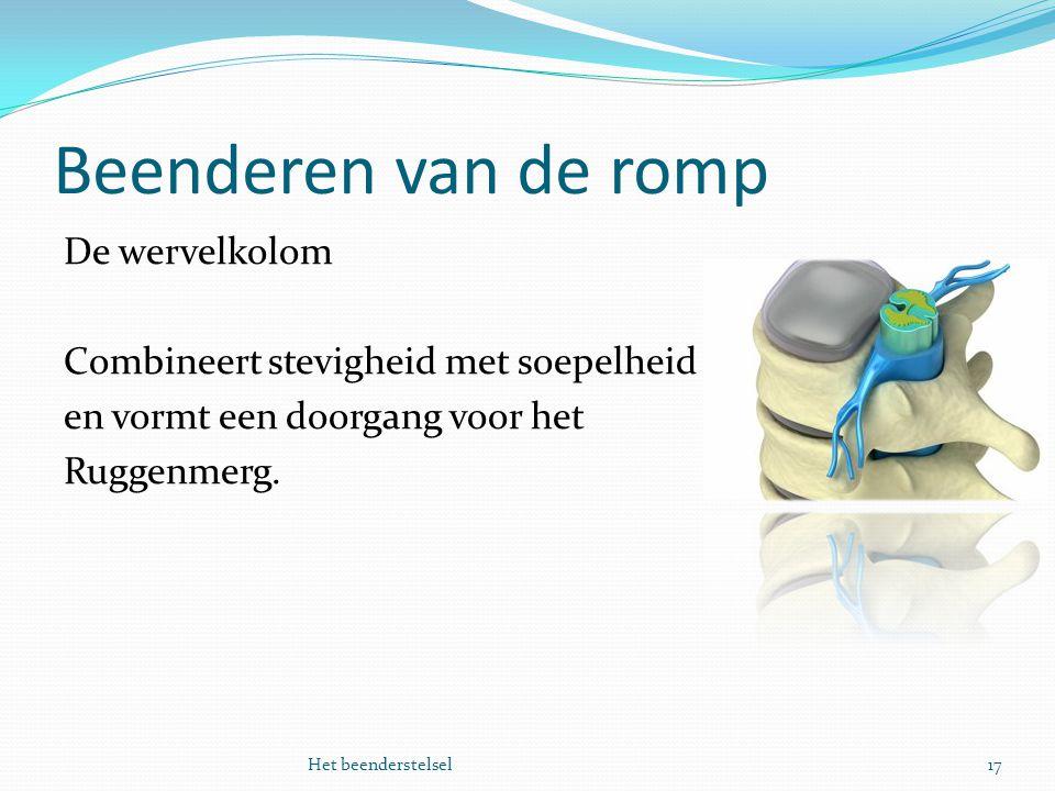 Beenderen van de romp 17Het beenderstelsel De wervelkolom Combineert stevigheid met soepelheid en vormt een doorgang voor het Ruggenmerg.