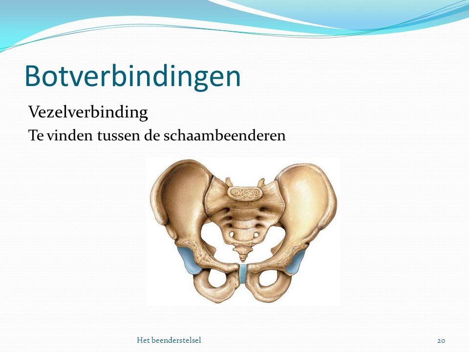 Botverbindingen 20Het beenderstelsel Vezelverbinding Te vinden tussen de schaambeenderen