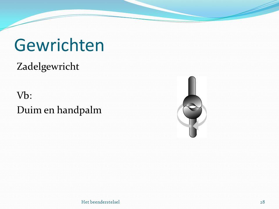 Gewrichten 28Het beenderstelsel Zadelgewricht Vb: Duim en handpalm