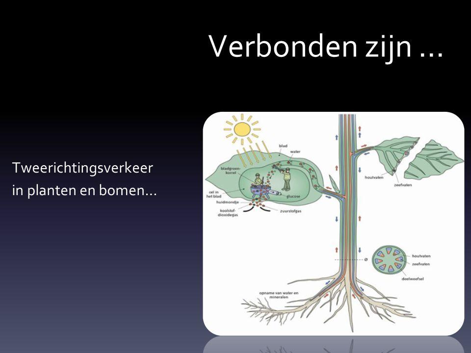 Verbonden zijn... Tweerichtingsverkeer in planten en bomen…