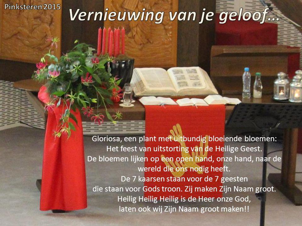 Gloriosa, een plant met uitbundig bloeiende bloemen: Het feest van uitstorting van de Heilige Geest. De bloemen lijken op een open hand, onze hand, na