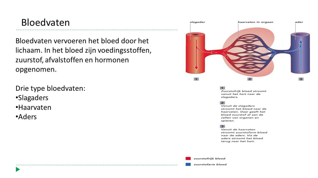 Bloedvaten vervoeren het bloed door het lichaam.