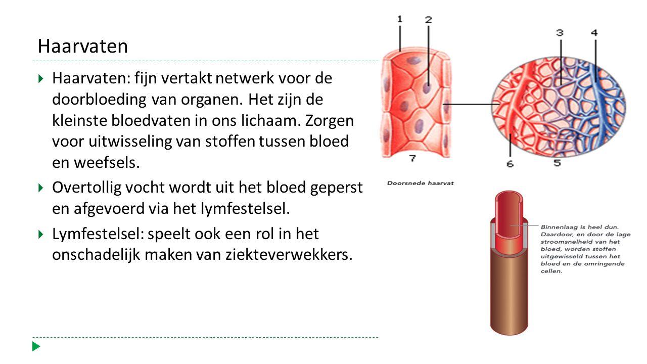 Haarvaten  Haarvaten: fijn vertakt netwerk voor de doorbloeding van organen.