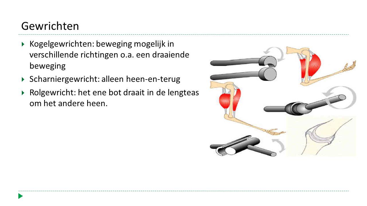 Gewrichten  Kogelgewrichten: beweging mogelijk in verschillende richtingen o.a.