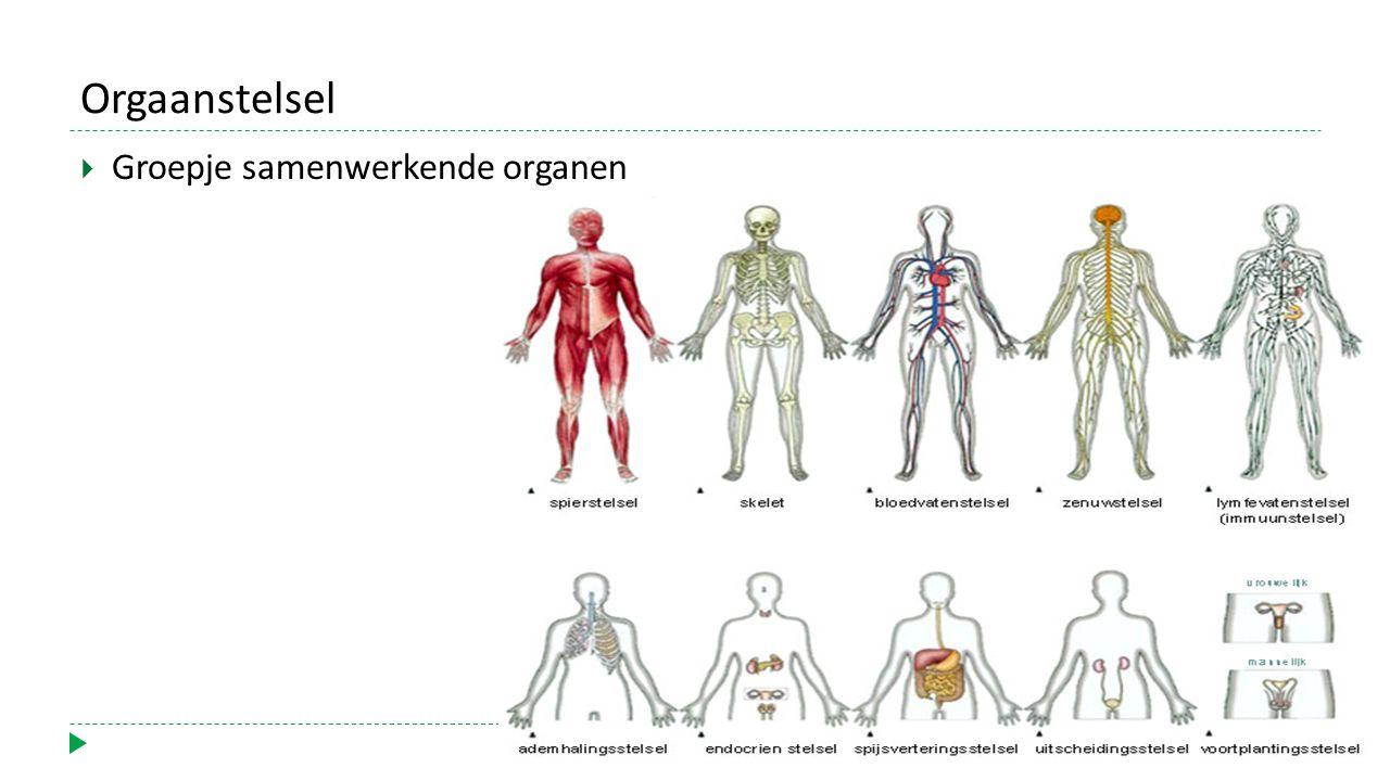 Orgaanstelsel  Groepje samenwerkende organen