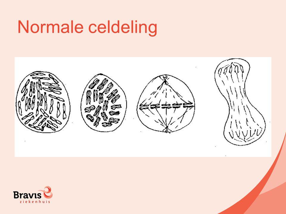 Normale celdeling