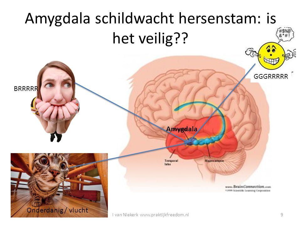 Amygdala schildwacht hersenstam: is het veilig?? BRRRRR Onderdanig / vlucht GGGRRRRR Amygdala I van Niekerk www.praktijkfreedom.nl9