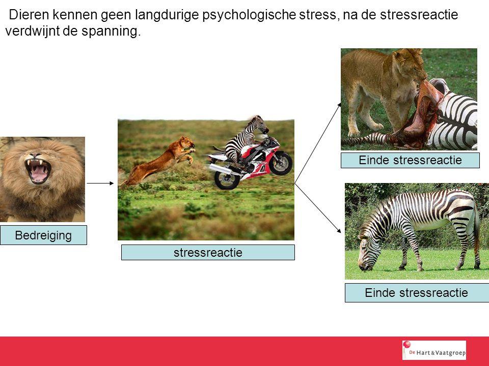 Dieren kennen geen langdurige psychologische stress, na de stressreactie verdwijnt de spanning. Bedreiging stressreactie Einde stressreactie