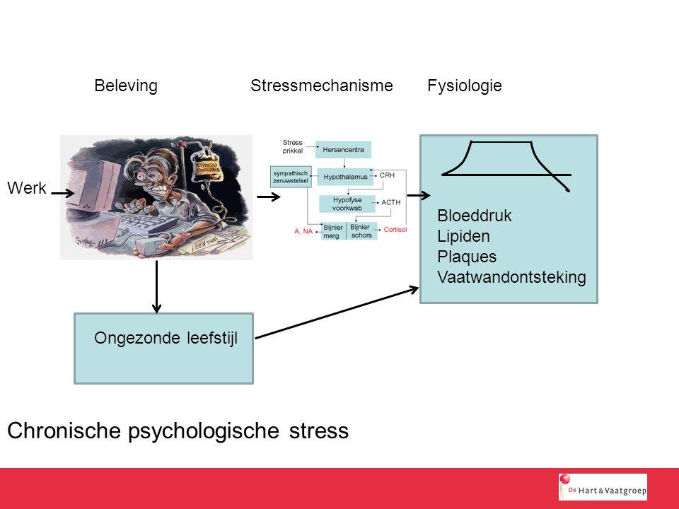 Chronische psychologische stress Werk Bloeddruk Lipiden Plaques Vaatwandontsteking Ongezonde leefstijl BelevingStressmechanismeFysiologie