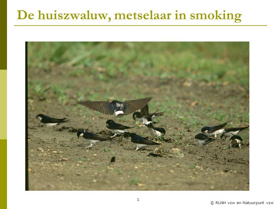 1 © RLNH vzw en Natuurpunt vzw De huiszwaluw, metselaar in smoking
