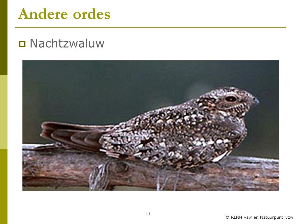 11 © RLNH vzw en Natuurpunt vzw Andere ordes  Nachtzwaluw