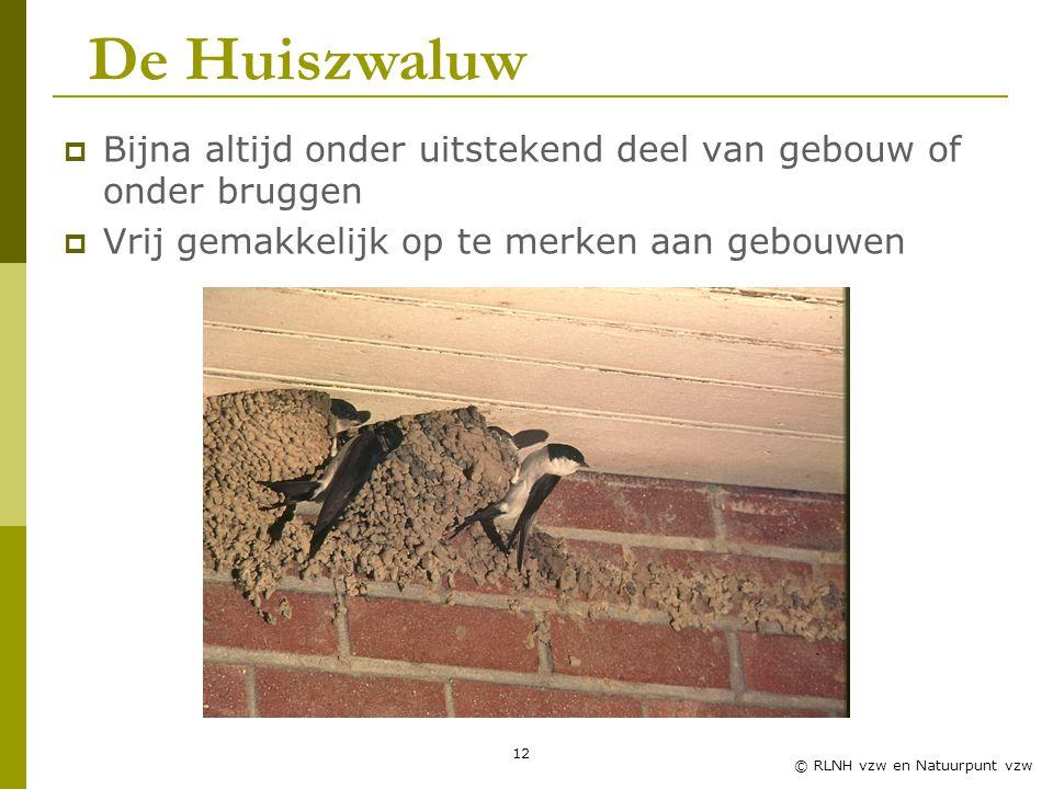 12 © RLNH vzw en Natuurpunt vzw  Bijna altijd onder uitstekend deel van gebouw of onder bruggen  Vrij gemakkelijk op te merken aan gebouwen De Huiszwaluw