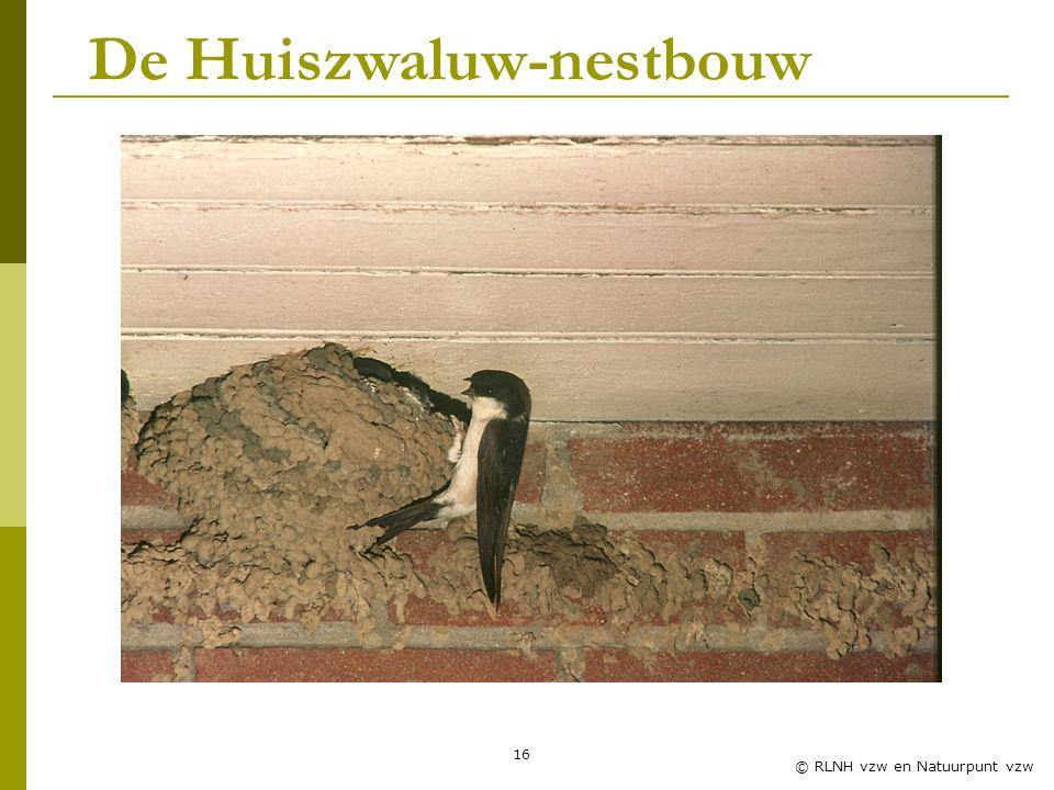 16 © RLNH vzw en Natuurpunt vzw De Huiszwaluw-nestbouw