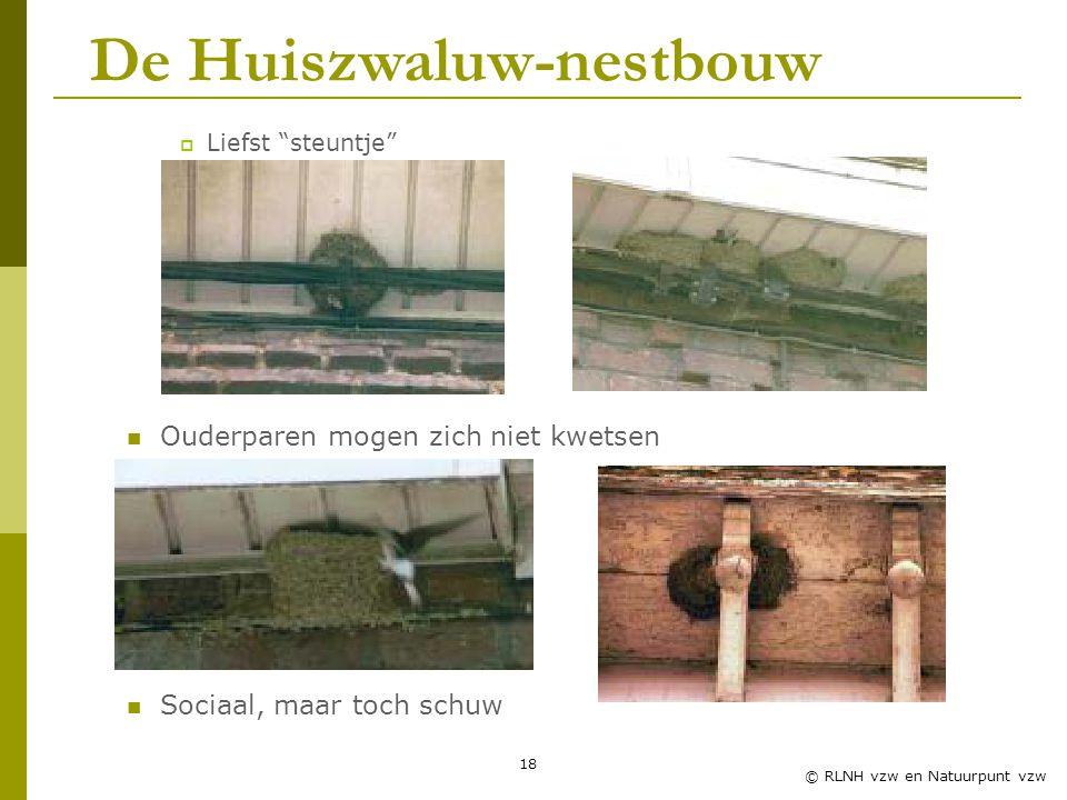 18 © RLNH vzw en Natuurpunt vzw  Liefst steuntje Ouderparen mogen zich niet kwetsen Sociaal, maar toch schuw De Huiszwaluw-nestbouw