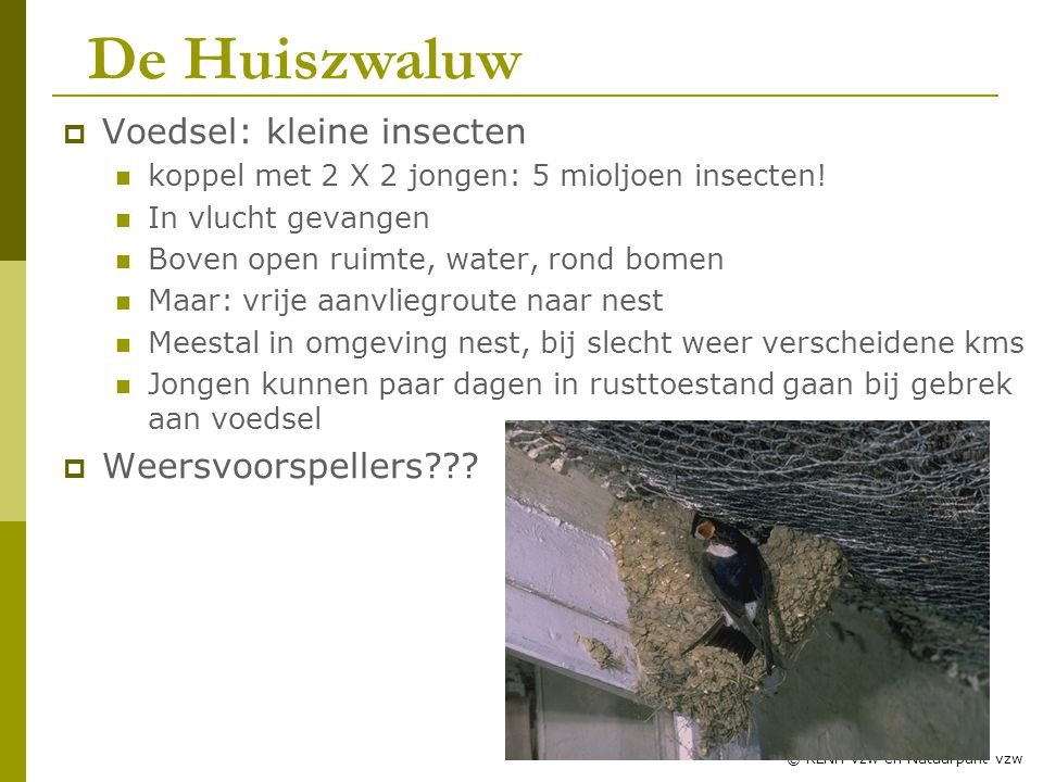 20 © RLNH vzw en Natuurpunt vzw  Voedsel: kleine insecten koppel met 2 X 2 jongen: 5 mioljoen insecten.
