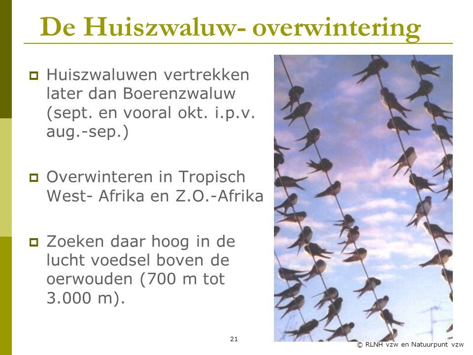 21 © RLNH vzw en Natuurpunt vzw  Huiszwaluwen vertrekken later dan Boerenzwaluw (sept.