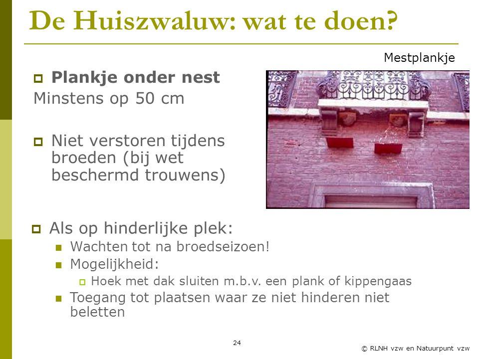 24 © RLNH vzw en Natuurpunt vzw De Huiszwaluw: wat te doen.