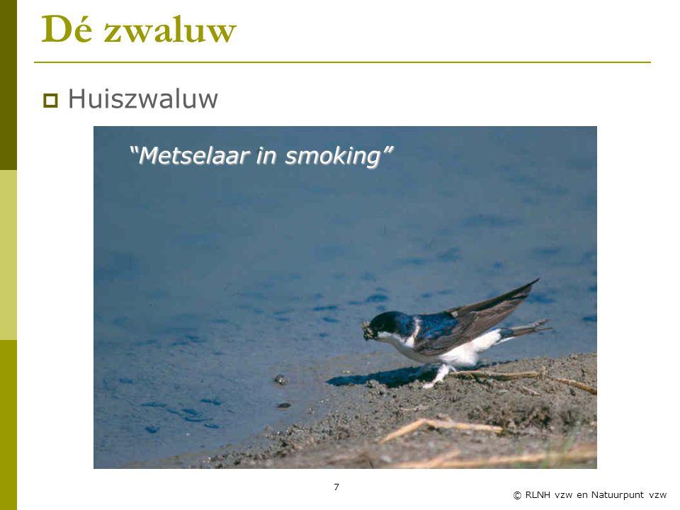 7 © RLNH vzw en Natuurpunt vzw Dé zwaluw Metselaar in smoking  Huiszwaluw