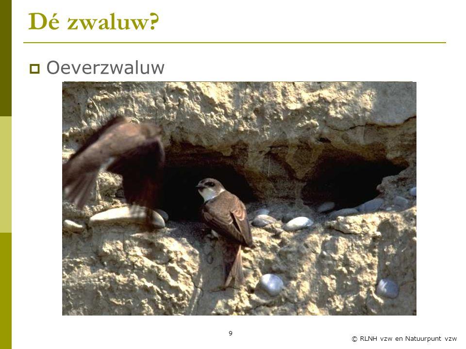 9 © RLNH vzw en Natuurpunt vzw Dé zwaluw?  Oeverzwaluw