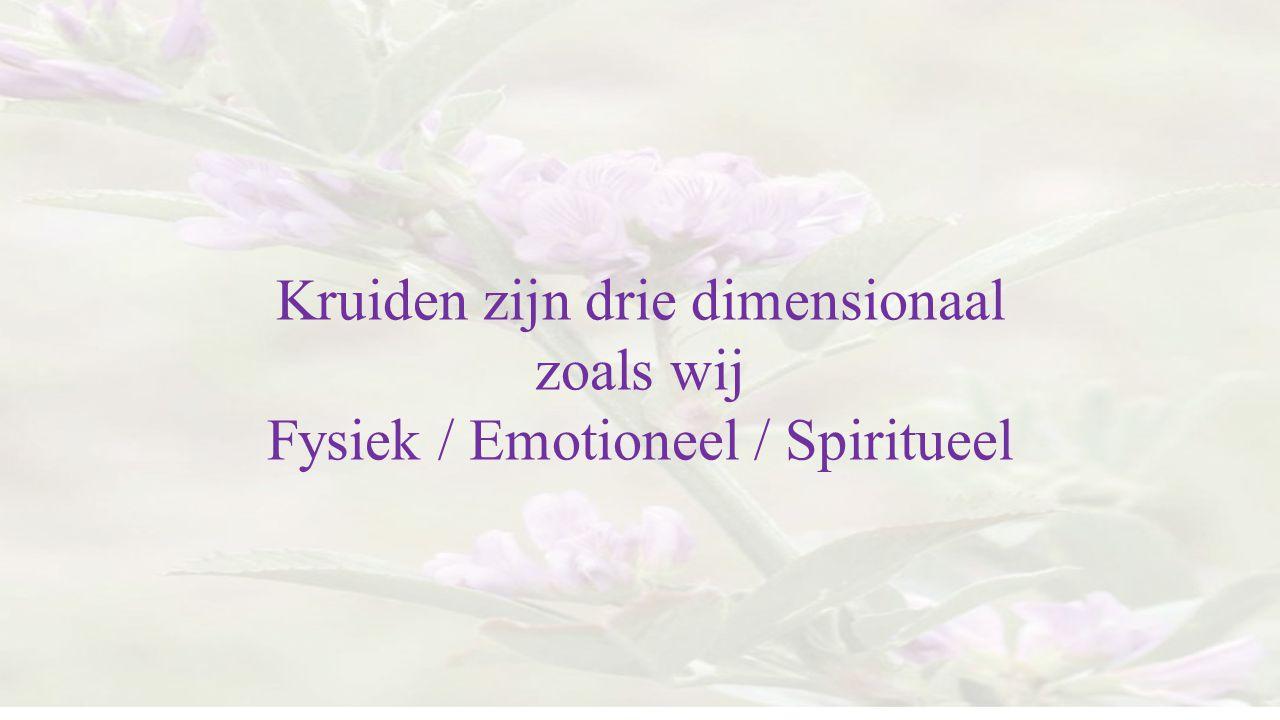 Kruiden zijn drie dimensionaal zoals wij Fysiek / Emotioneel / Spiritueel