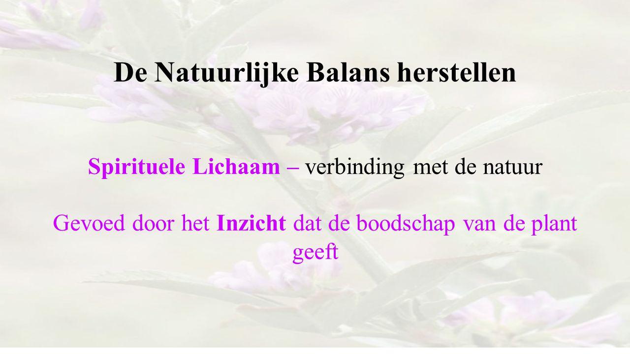 De Natuurlijke Balans herstellen Spirituele Lichaam – verbinding met de natuur Gevoed door het Inzicht dat de boodschap van de plant geeft